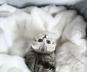 kitty, sweet, and cute image