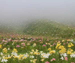 aesthetic, flowers, and meadow image