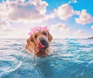 beautiful, dog, and hearts image