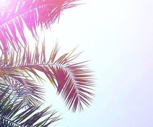 aesthetic, beach, and coachella image