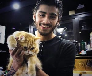 zayn malik, one direction, and cat image
