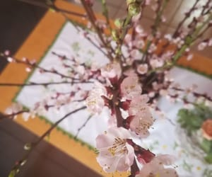 beautiful, blossom, and decoration image