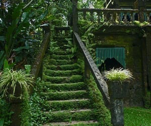 nature, garden, and green image