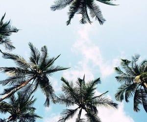 beach, dreamy, and hawaii image