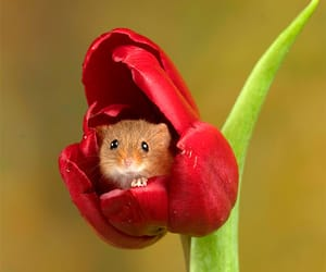 flowers, mouse, and nature image