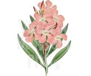 botanical, clipart, and etsy image