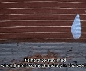 american beauty, life, and quotes image