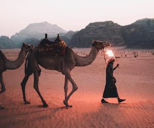 calm, camel, and human image