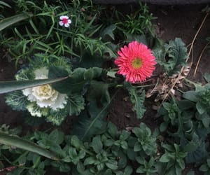 flower, sand, and vintage image