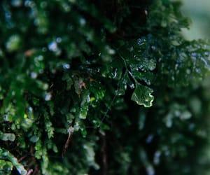 green, macro, and nature image