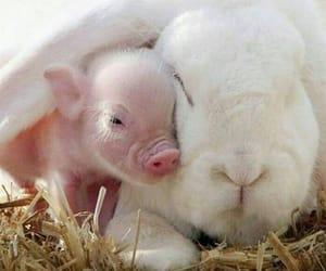 Animales, conejo, and granja image