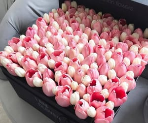 tulips, box, and flowers image