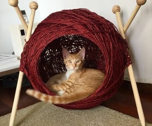 cats, knitting, and kittens image