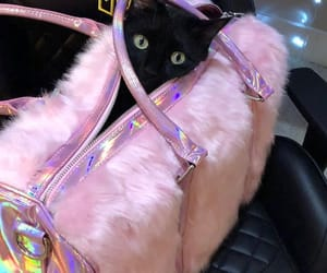 black cat, cat, and pink image