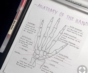 anatomy, draw, and hand image