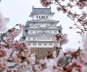 japan, osaka, and sakura image