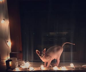 cat, lights, and cute image
