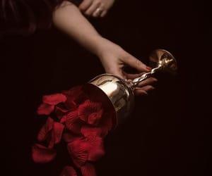 red, rose, and dark image
