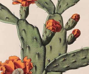 alternative, flowers, and nopal image