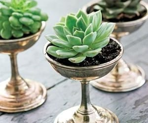 plants, cactus, and succulent image