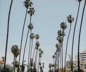 california, la, and summer image