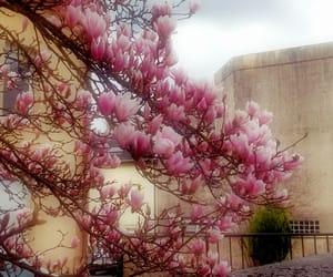 couleur, fleur, and printemps image