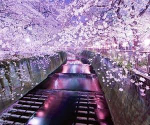 japan, flowers, and tree image