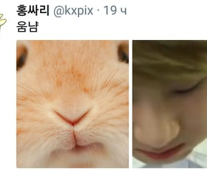 bunny, kpop, and bts image