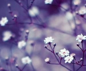 beauty, flores, and flower image