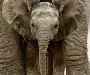Animales, naturaleza, and elefante image