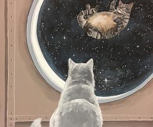 cats, Gatos, and universe image