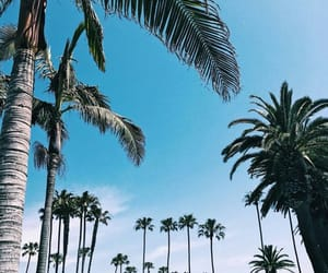 palm, summer, and palm threes image