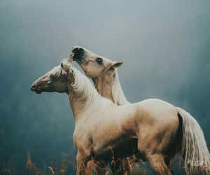 horse, animals, and love image