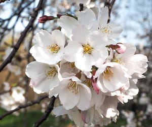 beauty, blossoms, and nature image