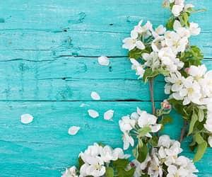 flowers, sakura, and spring image
