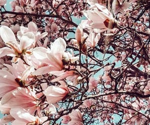 arbre, Fleurs, and flowers image