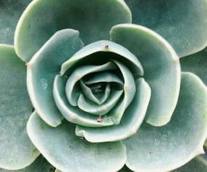 aesthetic, succulents, and fresh image