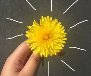 aesthetic, dandelion, and flower image