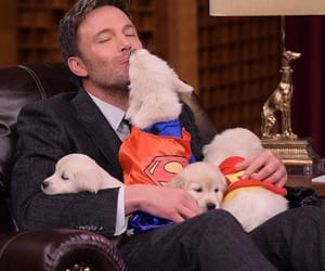 dog, Ben Affleck, and puppy image