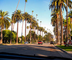 summer, palm trees, and photography image