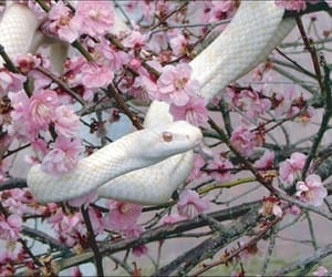 snake, pink, and flowers image