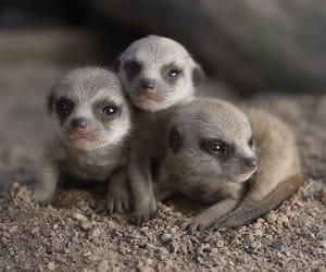 animals, newborn, and wildlife image