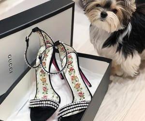 dog, heels, and fashion image