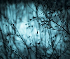 blue, bokeh, and Darkness image