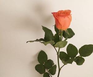 colored, orange, and peach image
