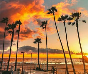 amazing, palms, and beach image