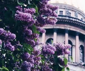 flowers, beautiful, and purple image