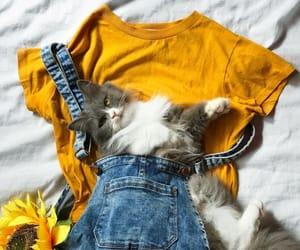 aesthetic, fashion, and animal image