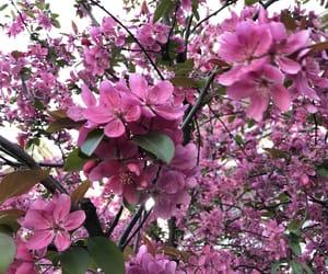 Belgrade, flower, and spring image