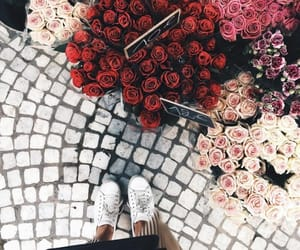flowers, rose, and beauty image